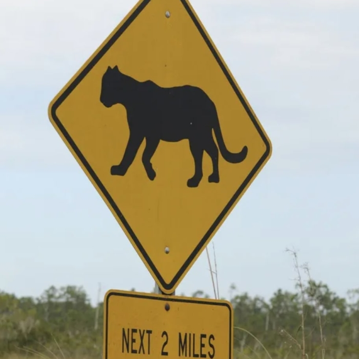 Florida Panther Signs Everglades National Park