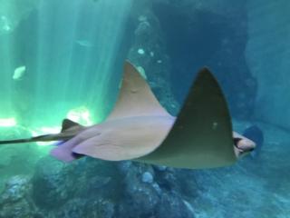 Large aquariums fill the center