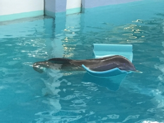 Winter the dolphin with a float